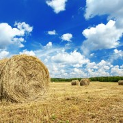 Beautiful rural landscape of a field with hay rolls